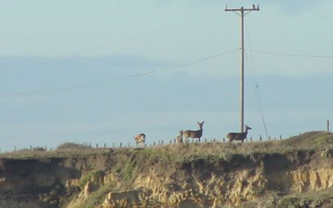 deer on cliff
